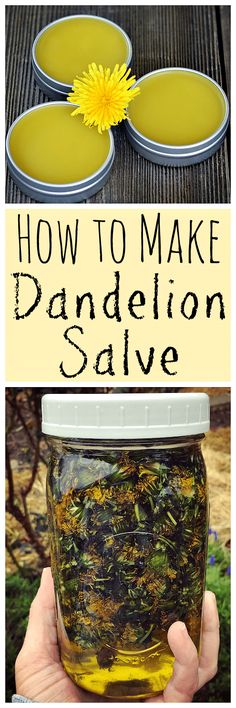 When dandelions are blooming make this healing dandelion salve! When dandelions are blooming make this healing dandelion salve! Natural Home Remedies, Herbal Remedies, Health Remedies, Natural Medicine, Herbal Medicine, Healing Herbs, Natural Healing, Limpieza Natural, Salve Recipes