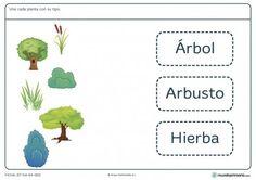 Ficha de tipos de plantas para primaria