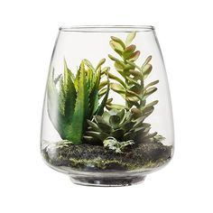 Threshold Faux Succulents in Glass Terrarium - Aloe and Mixed Sedum... (315 CZK) ❤ liked on Polyvore featuring home, home decor, floral decor, plants, plants & flowers, terrarium, green, green silk flowers, succulent terrarium and silk flowers