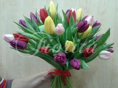 Tulipány Plants, Plant, Planets