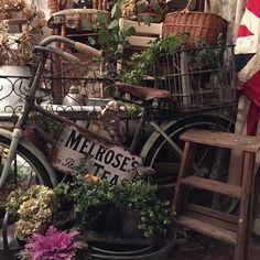 #antiqueshop#garden_styles#garden#green#gardening#junkgarden#junkstyle#junk#gardenstyle#antiques#vintagebicycle#brocante#antiqueladder#naturalgarden#interior by bijouantiques