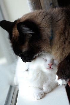 Dark mama & a white kitty,how unique.