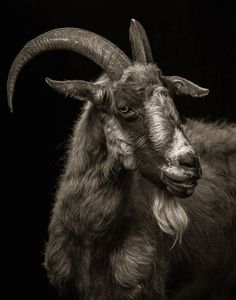 http://www.fubiz.net/2014/11/29/farm-animals-dramatic-portraits/