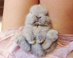 Have a pet bunny, no cage.  Pet bunnies love to sleep on laps.