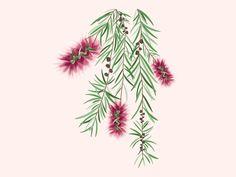 Bottlebrush Tree Illustration designed by Natalia Szczypek. Connect with them on Dribbble; Bottlebrush, Tree Illustration, Watercolour Art, Silver Spring, Garden, Plants, Painting, Inspiration, Biblical Inspiration