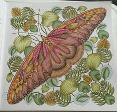 """206 Likes, 19 Comments - Melissa (@mnf_colours) on Instagram: """"Finished  #adultcoloringbook #adultcolouringbook #adultcolouring #adultcoloring…"""""""