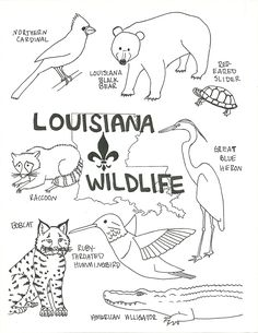 Louisiana Wildlife Coloring Page: free download/printable!