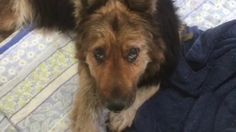 S.URGENT !!!!! - Her owner named her 'Lazy' and then dumped her at 13-years-old to busy shelter