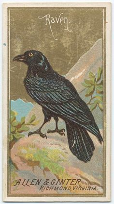 Allen & Ginter Raven. (ca. 1885-1895)