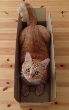 """* * """" Yoo got dat look in yer eye like, ' oh, a purrfect pint-sized coffin."""""""