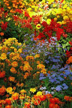 Most Design Ideas Beautiful Garden Scene Colour Flowers Plants Nature Pictures, And Inspiration – Modern House Design My Secret Garden, Flower Garden, Wild Flowers, Autumn Garden, Plants, Beautiful Flowers, Flower Field, Love Flowers, Beautiful Gardens