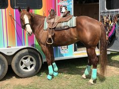 #Fallontaylor #barrelracer #barrelracing #horses #babyflo #barrelracingtips #fitnesschick #fitness #horselover #lashes #warpaintlashes #ranchdressn #westernwear #heiressathletics #wnfr #nfrbarrelracer #prorodeo #showjumper #showjumping