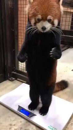 Cute Wild Animals, Cute Little Animals, Cute Funny Animals, Animals Beautiful, Cute Cats, Cute Animal Videos, Cute Animal Pictures, Animal Jokes, Cute Creatures