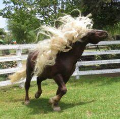 schwarzwalder kaltblut (black forest) horse on Pinterest | Forests ...