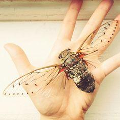 Beautiful Cicada.