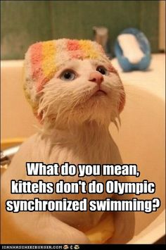 What do you mean, kittehs don't do Olympic synchronized swimming?