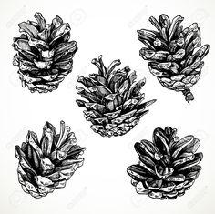 https://previews.123rf.com/images/azuzl/azuzl1311/azuzl131100074/24061151-Sketch-drawing-pine-cones-on-white-background-Stock-Vector-pine-cone.jpg