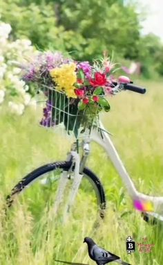 Beautiful Gif, Beautiful Morning, Good Morning Quotes, Bicycle, Videos, Jesus Cristo, Pasta, Cute Good Morning Images, Good Morning Beautiful Images