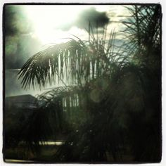 After some much needed rain, the resilient Sarasota sun shines again!