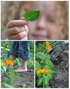 Create a kid's picking garden, a small area of your garden that your kiddo can do whatever they want with - includes links to lists of edible AND poisonous flowers