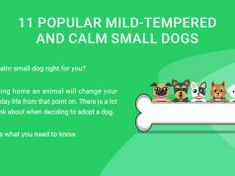 11 Popular Mild-Tempered and Calm Small Dogs Dog Ear Infection Treatment, Dogs Ears Infection, Top Dog Food Brands, Top Dog Foods, Meds For Dogs, Worms In Dogs, Best Treats For Dogs, Pregnant Dog, Sweet Potatoes For Dogs