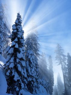 After Snow Storm  - Sequoia National Park, California