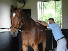 """Massage for a Horse's """"Cold Back"""""""