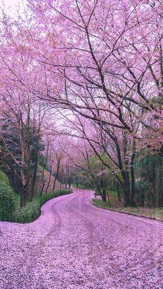 Beautiful Nature Scenes, Beautiful Photos Of Nature, Beautiful Places To Travel, Amazing Nature, Nature Photos, Beautiful World, Beautiful Flowers, Nature Videos, Beautiful Landscape Wallpaper