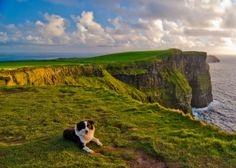 Cliffs of Moher, County Clare, Ireland. West Coast Of Ireland, Love Ireland, Dublin Ireland, Ireland Vacation, Ireland Travel, Tourism Ireland, Oh The Places You'll Go, Places To Visit, Wild Atlantic Way
