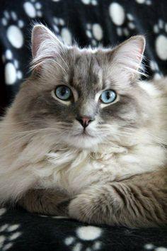 beautiful cat                                                                                                                                                                                 More