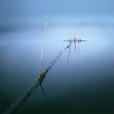 Silent Water: by Fusyou Zen #Photography #Digital #Nature #Scenery #Waterscape