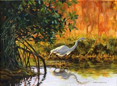 Paintings by Carol McArdle, award winning fine art paintings of Florida landscapes and nature. Original oil and acrylic paintings of nature, landscapes, birds. the Everglades, beaches, forests, swamps, cypress trees, mangroves, beach scenes, Sanibel, Estero, Naples, Fort Myers, giclee prints for sale,