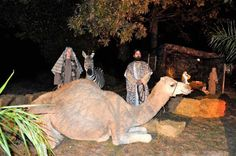 I love a live nativity at Christmas!!! (Have never seen one (until now) with a zebra)!