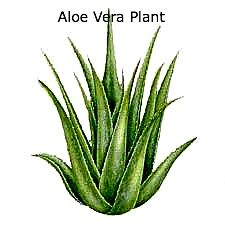 Read the benefits of Aloe Vera. Buy Aloe Vera Gel, Creams, Lotions and Products. Home Remedies For Hives, Hives Remedies, Herbal Remedies, Asthma Remedies, Aloe Vera Liquid, Aloe Vera Creme, Natural Treatments, Natural Cures, Natural Health