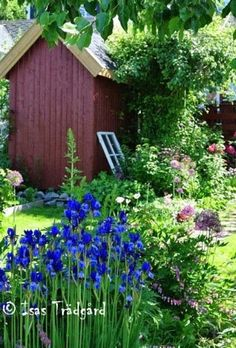 The garden shed and flowers! Garden Cottage, Garden Beds, Backyard Stream, Landscape Design, Garden Design, The Constant Gardener, Scandinavian Garden, Love Garden, Beautiful Gardens