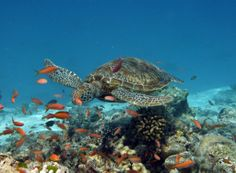 Under water experience #voyagewave #maldivesholidays ---> www.voyagewave.com