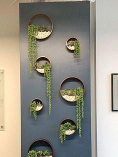 Round Hanging Planter Indoor Hanging Wall Planter Hanging im Hanging Terrarium, Hanging Planters, Wall Terrarium, Hanging Gardens, Wall Gardens, Succulent Wall Planter, Succulents Garden, Cheap Planters, Recycled Planters