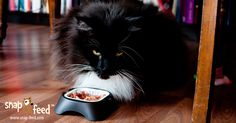 Every day more cats are being fed with our bowl holders. Do you wanna have one, too? ;) Video coming soon, stay tuned!  #Catfood #Cat #Katze #Katzenfutter