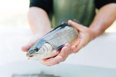 Frisch aus dem Wasser Food, Pisces, Foods, Water, Essen, Meals, Yemek, Eten