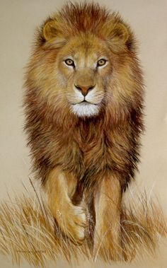 """Original Pastel Drawing Stunning African Lion - Wilder Fine Arts - African Lion walking in brown grass. This is an original work, hand-drawn in pastel, on acid free paper 12.75 inches wide by 19.5 inches high; there are no reproductions and it is unframed. It is signed """"the Porter family"""" and has the artists' logo and individual artwork identification number, all at the lower right of the drawing."""