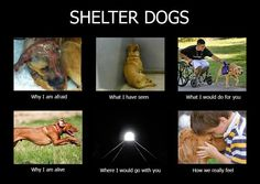 Shelter Dogs. First pic is so sad. :( I hate seeing animals hurt