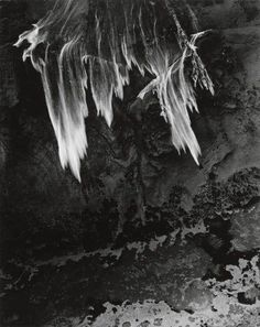 Minor White, Untitled (falling water), 1960.  I like how this image shows motion from the water falling. The rough texture of the rocks behind it makes it stand out and gives depth to the image. The lines in the water act as leading lines and move your eyes down to look at different aspects of the image.