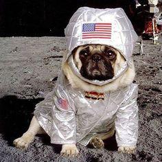 Este perro a viajado a la luna...¡y tú no! #patasbox #estilodevida #perrosviajeros