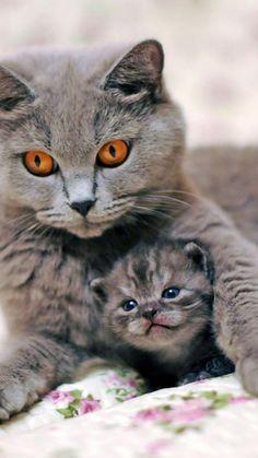 Mama and Baby Cat #cutecats #cats #kitten #animals #cuteanimals