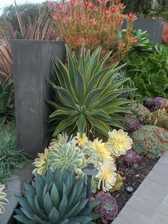 Slideshow « California Friendly Design Ideas | Roger's Gardens Low Water Landscaping, Succulent Landscaping, Landscaping Tips, Landscaping Contractors, Luxury Landscaping, Landscaping Company, Landscaping Software, Landscaping With Rocks, Outdoor Landscaping