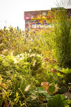 urban-gardening Urban Gardening, Blog, Patio, Rose, Plants, Creative, Ideas, Pink, City Gardens