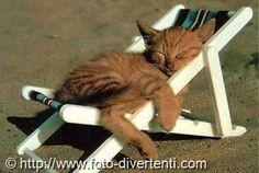 gennaro calvitti - Google+