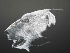 side view drawing of the head of a polar bear