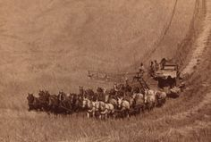 Retronaut - Combine harvester pulled by a thirty-three horse team, Washington