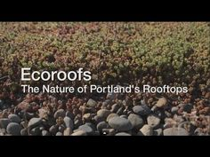 A video from the City of Portland, Oregon, Bureau of Environmental Services about green roof water quality improvements, aesthetic appeal, economics and other benefits. Find more information at www.portlandoregon.gov/bes/ecoroof
